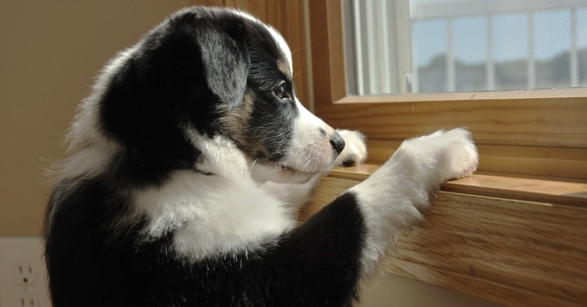 how to stop dog's separation anxiety