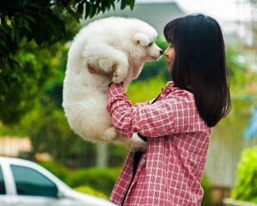dog training lies