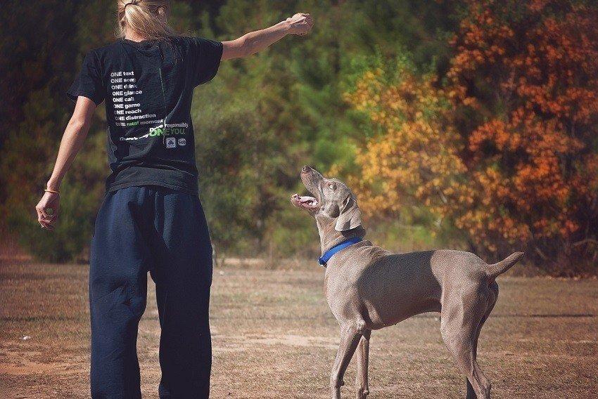 Dog Aggression Over Treats