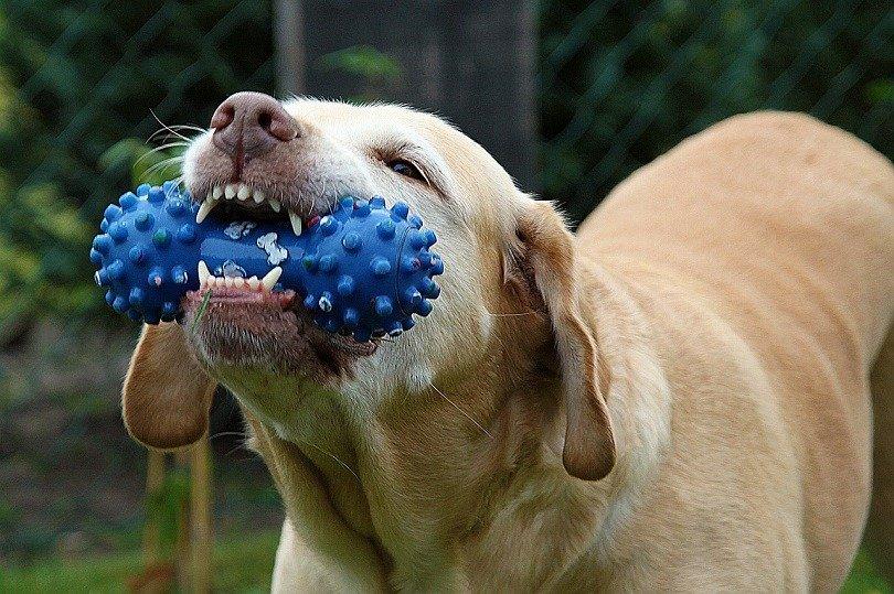 dogs choke