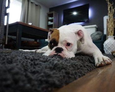 dog apartment hacks