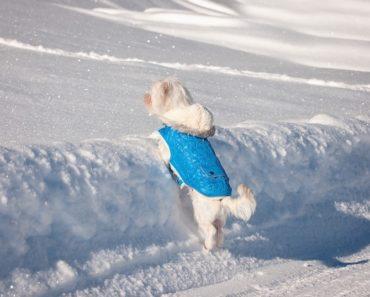 best winter dog jacket