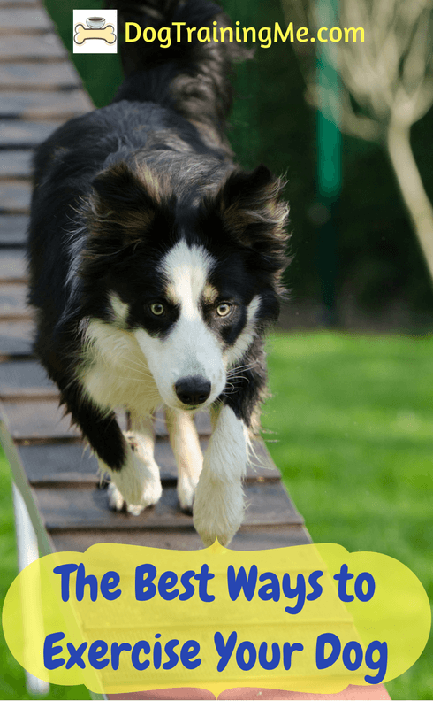 Best Ways to Exercise Your Dog