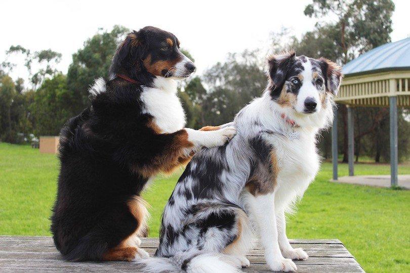 massage your dog