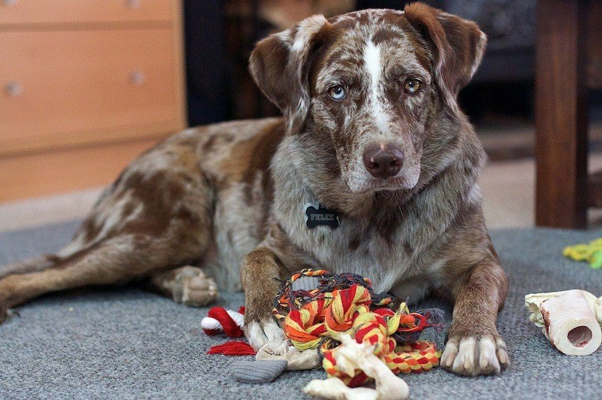 Best DIY dog toys