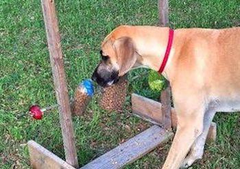 DIY Dog spinner feeder toy