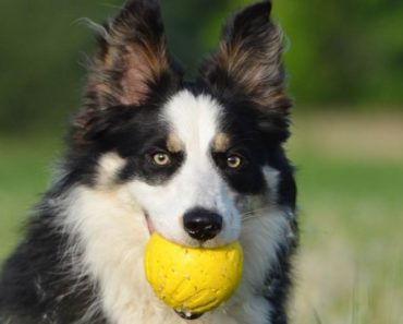 outdoor activities for dogs