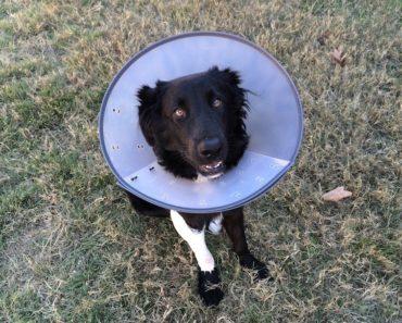 alternative medicine for dogs