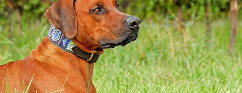 best dog collars