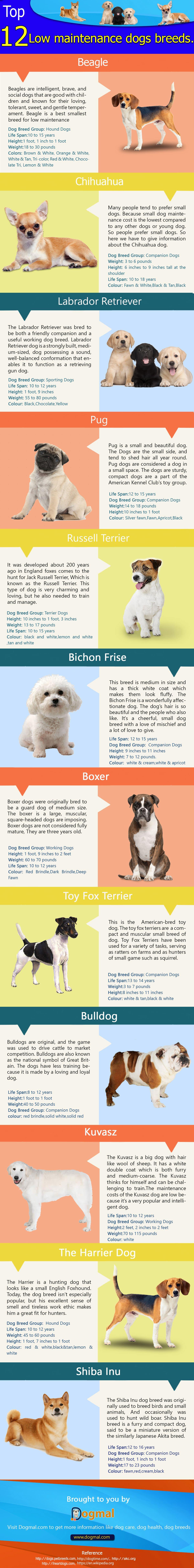 low-maintenance-dog-breeds