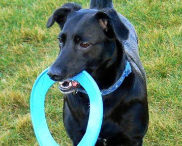 Dog Park Etiquette Toys