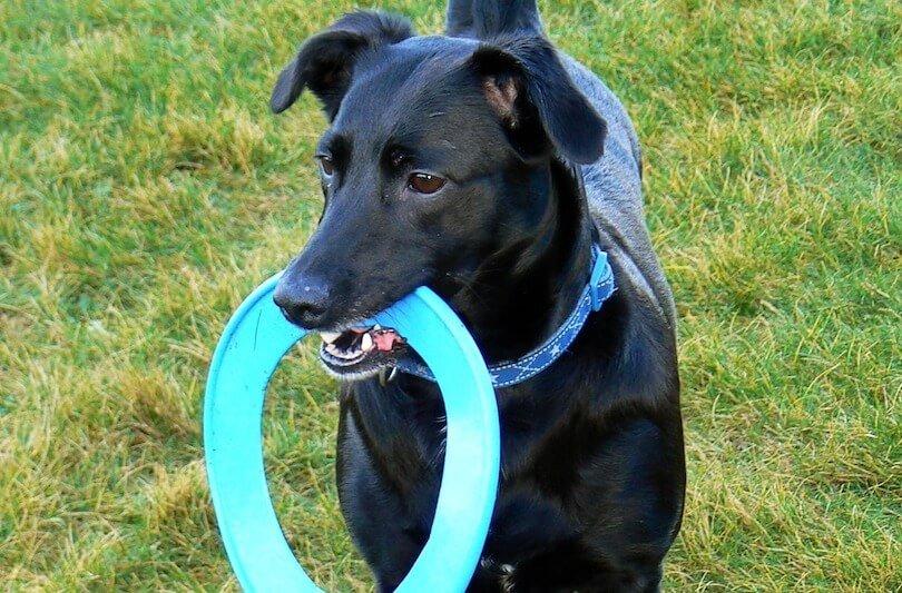 Stop Dog Aggression At Dog Park