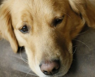 Prevention and Treatment for Dog UTI