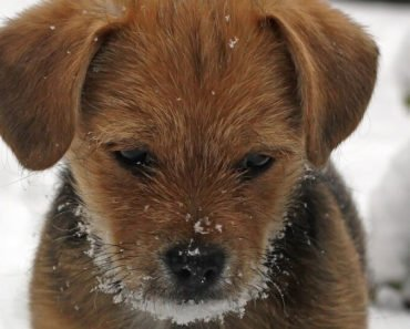 how to know your dog is too cold