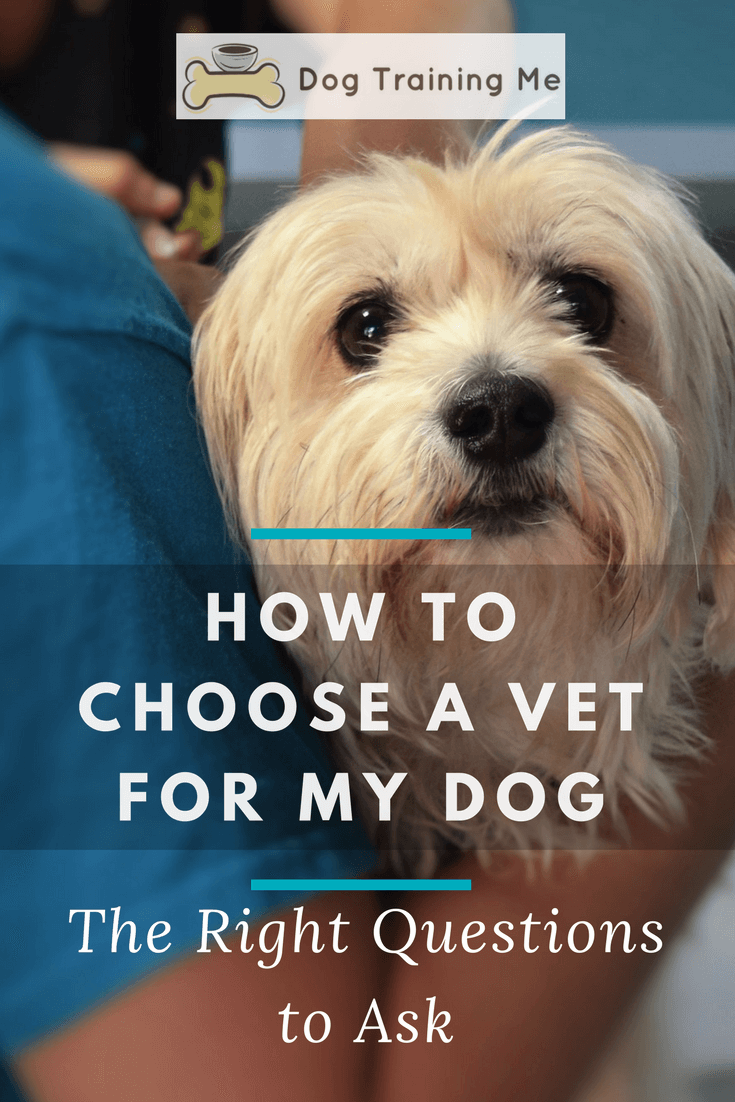 how to choose a vet for my dog