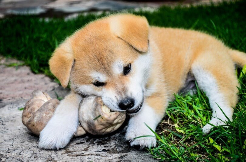 safe bones for dogs