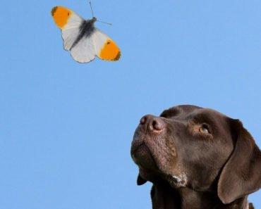 humane dog euthanasia