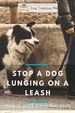 How to Stop a Dog From Lunging on a Leash