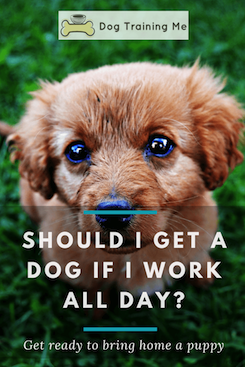 Should I Get a Dog If I Work All Day