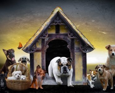 boarding kennel for dogs