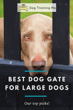 best dog gate for large dogs