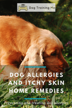 dog allergies itchy skin home remedies