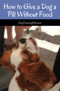 how to give a dog a pill without food