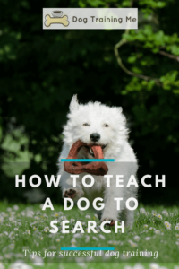 how to teach a dog to search for something