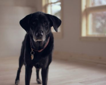 senior dog restless