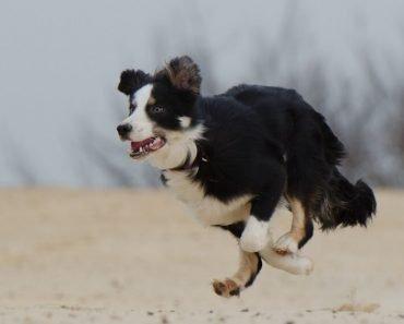 DIY dog run in backyard