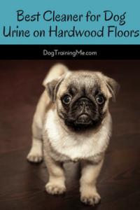 Best Cleaner For Dog Urine On Hardwood Floors - Best cleaner for dog urine on hardwood floors