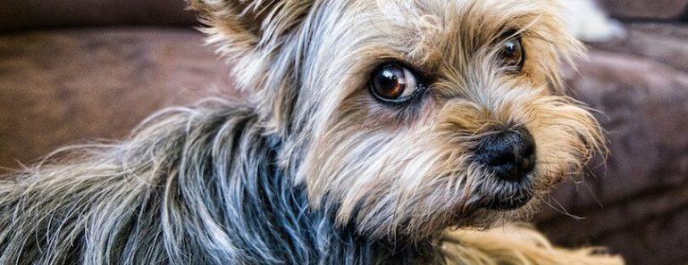 dog has hip dysplasia