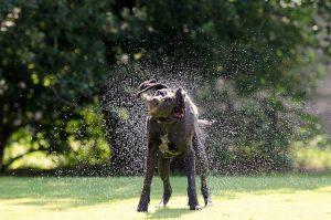 dog shampoo for lice