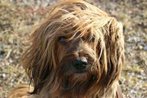homemade dog shampoo