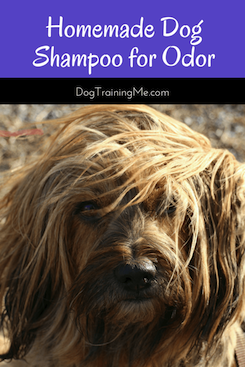 homemade dog shampoo for odor
