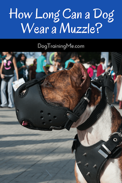 how long can a dog wear a muzzle