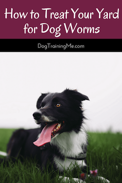 how to treat your yard for dog worms