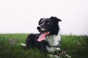 treat your yard for dog worms