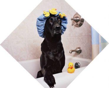 tea tree oil dog shampoo