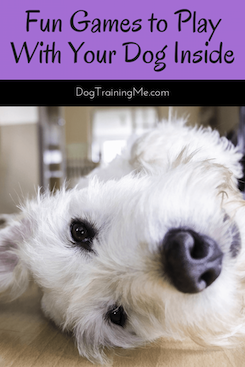 fun games to play with your dog inside