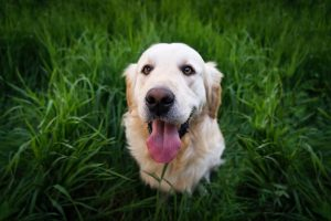 oral flea medicine for dogs