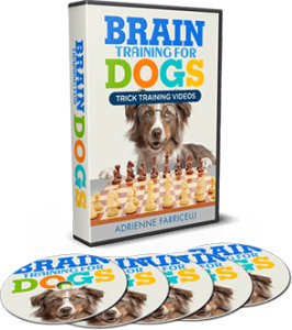 brain training for dogs videos