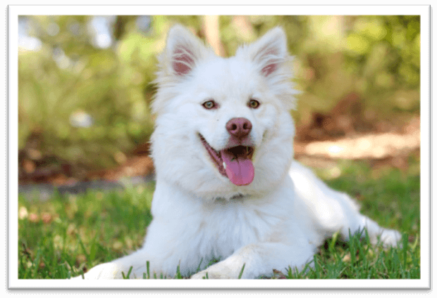 Can you give your dog human probiotics