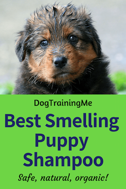 best smelling puppy shampoos
