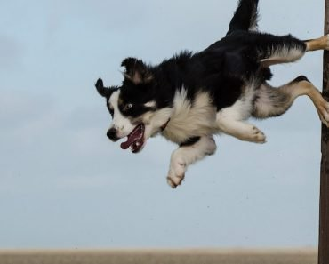 calm an over-excited dog