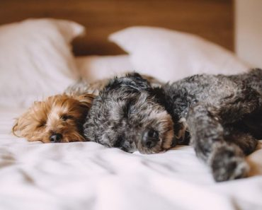 essential oils for pet odor