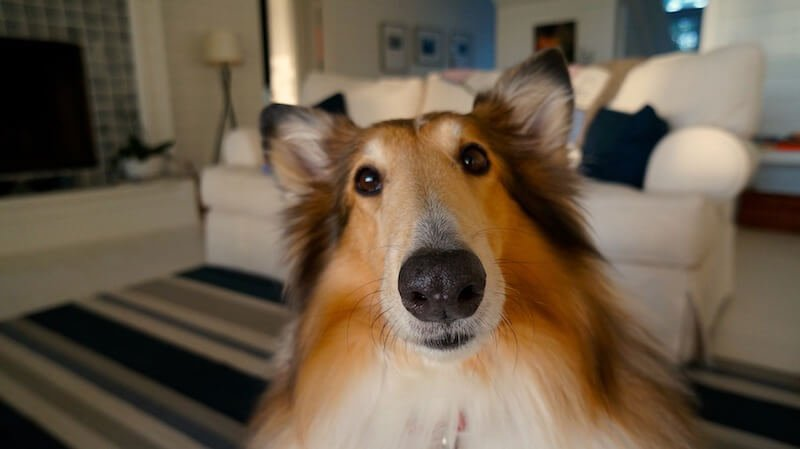 make your dog happier