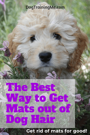 best ways to get mats out of dog hair