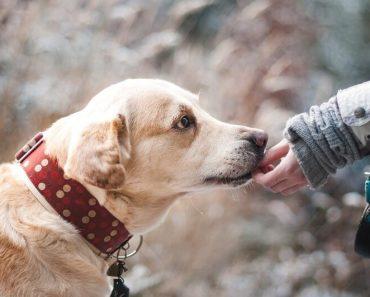 dogs non-dairy probiotics