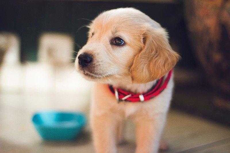 probiotics dogs